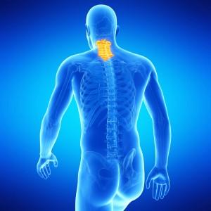 medical illustration of the human cervical spine